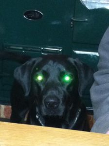 Ozzy's eyes glowing green