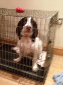Benjie spends most of the day in the crate with his brother