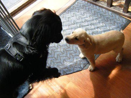 Meeting puppy