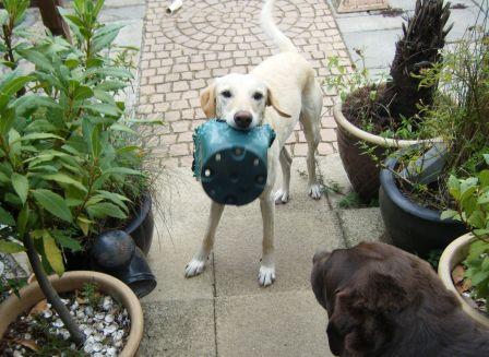 Dog with flowerpot