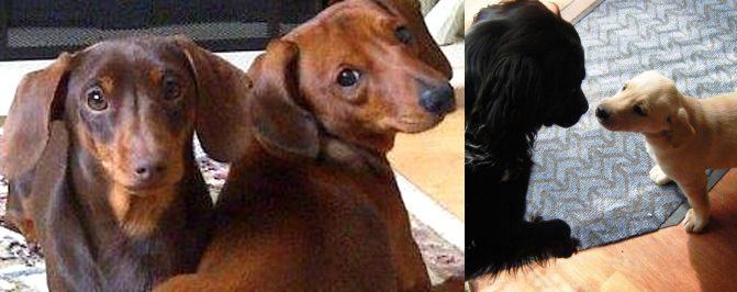 The Biggleswade Dog Behaviour Trainer