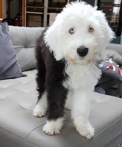 Bouncy puppy